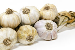 Heads garlic stock image