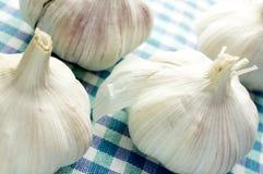 Heads of garlic Royalty Free Stock Image