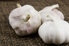 Heads of garlic Royalty Free Stock Photography