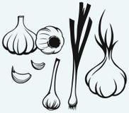 Heads of garlic Stock Image