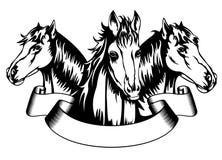 Heads horses Royalty Free Stock Photos