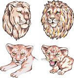 Heads of lions and lion cubs Royalty Free Stock Photos