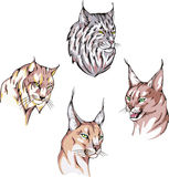 Heads of lynx Stock Image