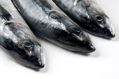 heads mackerel fish Stock Images
