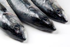 heads mackerel fish Stock Images