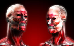 Heads Of Muscle. A set of faces made out of muscle for medical or horror concepts Stock Photography