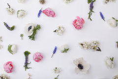 Heads of pastel, spring flowers Stock Image