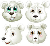 Heads of polar bears. Illustration of the heads of polar bears on a white background Royalty Free Stock Photo