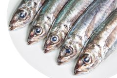 The heads of raw mackerel on a plate. Royalty Free Stock Images