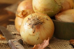 Heads of raw yellow onions Stock Image