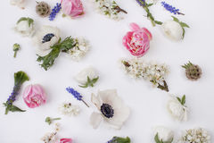 Heads of spring flowers Stock Photos