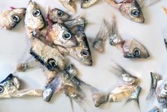 Heads and tails of shallow fish lying on a plate. Torn off heads and tails of shallow salty fish lying on a plate close up, background Stock Image