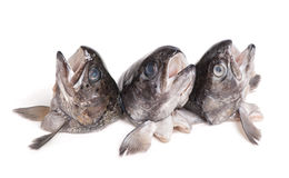 Heads of trout fish Stock Photo