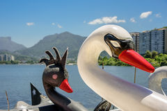 Heads of white and black Swan Pedal Boats with blurry Rodrigo de Stock Image