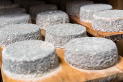 Heads of young goat cheese  with a blue mold Royalty Free Stock Photos