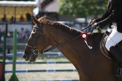 Headshot of an award-winning race horse Royalty Free Stock Photos
