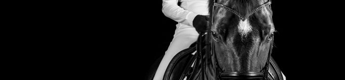 Headshot de cheval Photo libre de droits