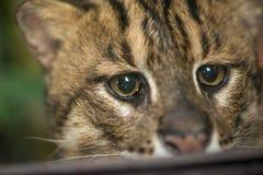Headshot de un gato de la pesca Imágenes de archivo libres de regalías