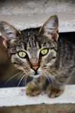 Headshot del gato imagen de archivo