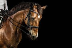 Headshot des Pferds Stockfotos