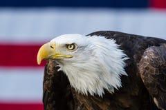 Headshot des Weißkopfseeadlers vor Amerika-Flagge Stockbilder