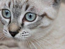 Headshot of domestic cat