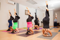 Headstand in yoga class Stock Photography