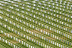 Headstones. Rows of headstones, Golden Gate National Cemetery, San Bruno, California royalty free stock images