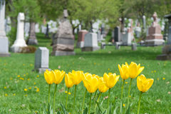 Headstones in a cemetary Stock Photography