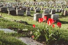 Headstones in Montreal Cemetery Stock Photo