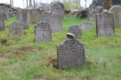 Headstones na Żydowskim cmentarzu w OlÅ ¡ jakaś blisko JindÅ™ichuv Hradec Zdjęcie Stock