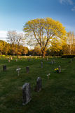Headstones and tree at graveyard. In evening light at UNESCO World Heritage Site Woodland Cemetery in Stockholm, Sweden stock photos