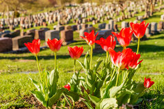 Headstones w Montreal cmentarzu Fotografia Stock