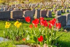 Headstones w Montreal cmentarzu przy zmierzchem Obrazy Stock