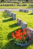 Headstones w Montreal cmentarzu przy zmierzchem Obraz Stock
