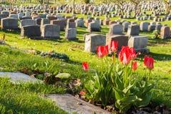 Headstones w Montreal cmentarzu przy zmierzchem Zdjęcia Royalty Free