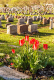 Headstones w Montreal cmentarzu przy zmierzchem Zdjęcia Stock