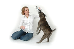Heal Boy!. Woman playing with her dog and his toy. Or woman training her dog to not be so aggressive royalty free stock image