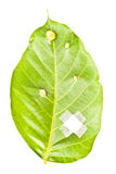 Heal leaf. Keep the earth stock image