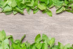 Healing background with fresh mint. Stock Images
