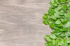 Healing background with fresh mint. Stock Photo
