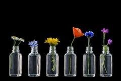 Healing flowers in bottles for herbal medicine on black royalty free stock photos