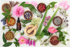 Healing Flowers and Herbs. Healing flower and herb selection used in natural alternative medicine on distressed white wood background stock images