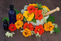 Healing Flowers and Herbs Royalty Free Stock Images