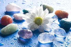 Healing gem stones. Various gems stones with a white daisy over blue background with drops of water Stock Image