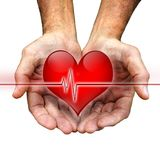 Healing hands. Cupped man's hands hold a heart with an ekg line royalty free stock photography