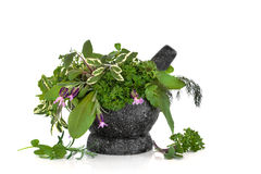 Healing Herbs Royalty Free Stock Images