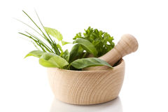 Healing herbs Stock Images