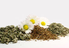 Healing herbs Royalty Free Stock Photos