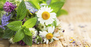 Healing Herbs. For Alternative Natural Medicine and Therapy royalty free stock image